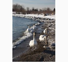 Family Walk on the Beach - Wild Trumpeter Swans, Lake Ontario, Toronto Unisex T-Shirt