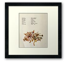 Language of Flowers Kate Greenaway 1884 0024 Descriptions of Specific Flower Significations Framed Print