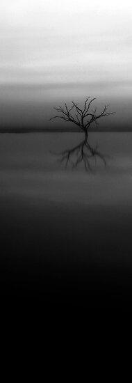 Shades of Grey by Pene Stevens