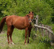 Nelson -NNEP Ottawa by Tracey  Dryka