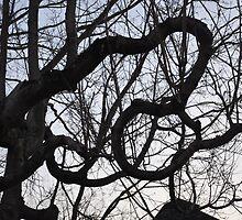 Metamora Crooked Tree by threadworks