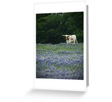 Longhorn in Blue Greeting Card