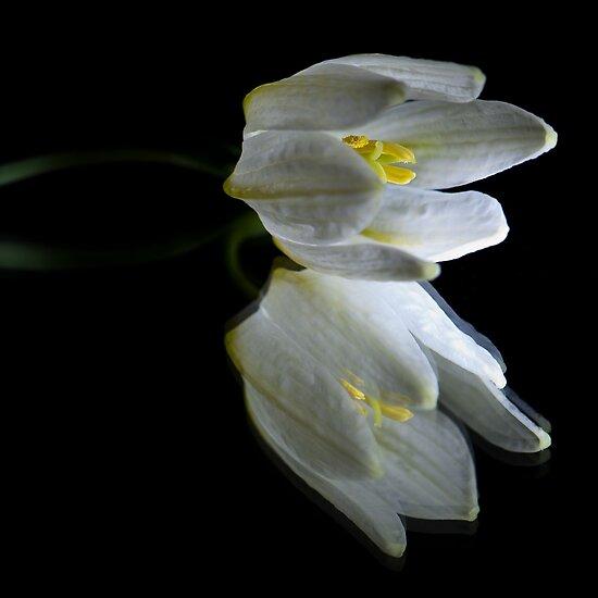 Peaceful Beauty 2 by Jacinthe Brault