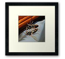 Sting..!! Framed Print