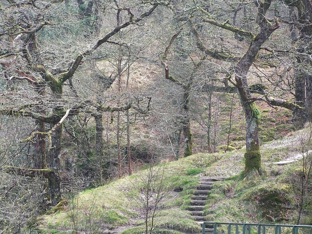 Wild Wales by leunig