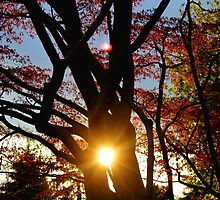 Sunset in the Tree by Gilda Axelrod