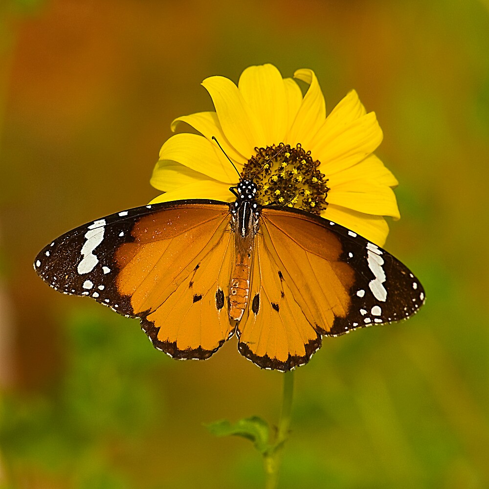 The Butterfly and Yellow Flower-Sequel#2 by Mukesh Srivastava