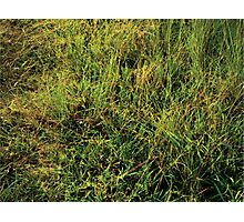 The Grass Is Always Greener. Photographic Print