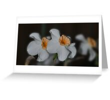 Daffodil Duo Greeting Card