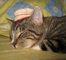 Hat on Cat by Alexandra Strömgren