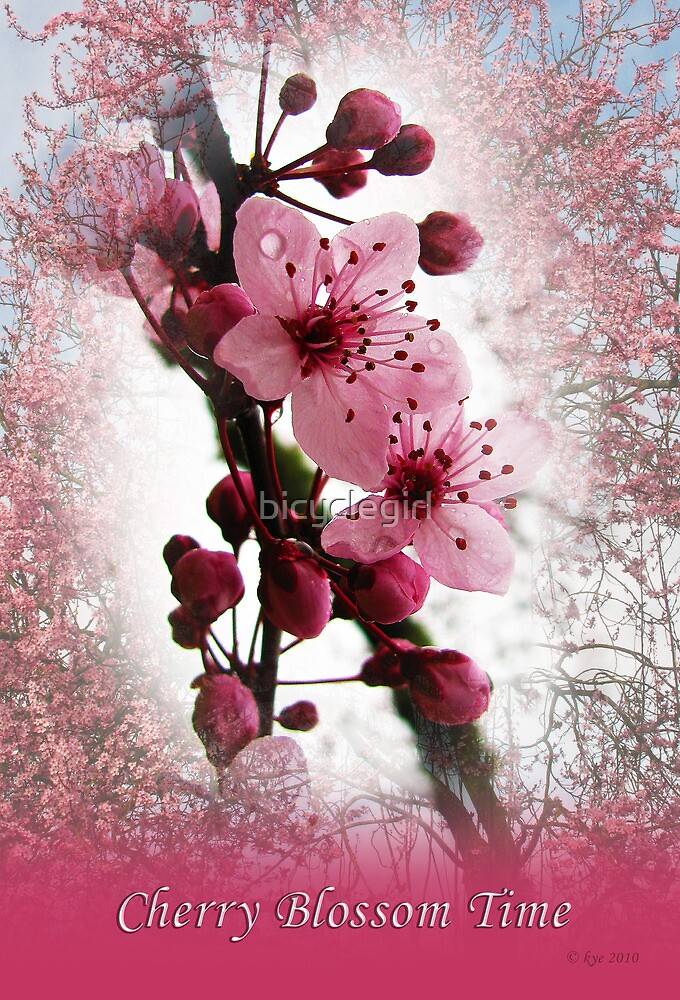 Cherry Blossom Time by bicyclegirl