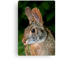 High Island Rabbit Canvas Print
