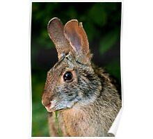 High Island Rabbit Poster