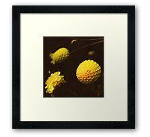 Star System Framed Print