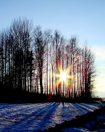 Evening Sun by Ritva Ikonen