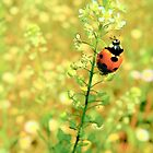 Ladybug Dance by catherinemhowl