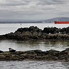 on the Firth ... by SNAPPYDAVE