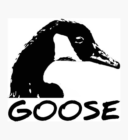 Canadian Goose Black and White Photographic Print