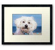 The Cutest Dog Ever Framed Print