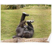 Gorilla Enrichment Poster