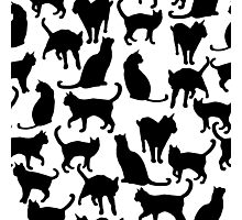 Cats  Photographic Print