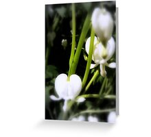 white bleeding heart macro, focal black and white Greeting Card