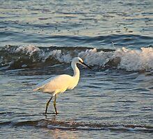 Snowy Egret - Egretta thula by MotherNature