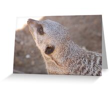 Curious Meerkat Greeting Card