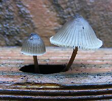 I love Fungi because they pop up in the most unexpected places. by Esther's Art and Photography