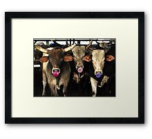 Bubble Gum Blowing Rodeo Bull Cows Western pop Art Southwest Cowboy culture Framed Print