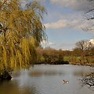 Willow on the Lake by Lisa Williams