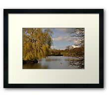Willow on the Lake Framed Print