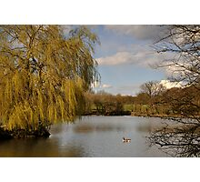 Willow on the Lake Photographic Print