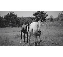 Horses In The Meadow Photographic Print
