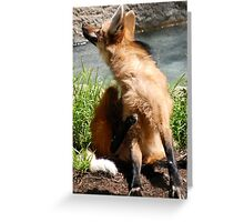 Itching Wolf Greeting Card