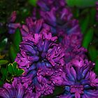 Purple hyacinths by kellyattrill