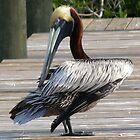 Pelican, Pine Island Florida by Tom Michael Thomas
