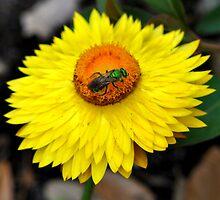 green hornet by Douglas Alan Photography