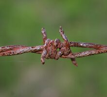 rusty barb-wire by NHBabs