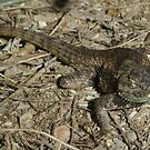 Spiny Lizard by PatGoltz