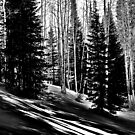 Winter Solitude Black and White by Ken Fortie