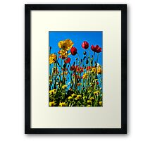 Among the poppies Framed Print