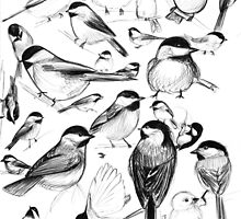 Chickadee Study by Kristin Thornton
