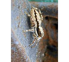 ©NS A Spider Life L You Again IIIA. Photographic Print
