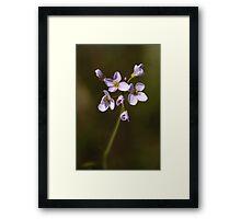 Wild Flower ( Cardamine Pratensis ) Framed Print