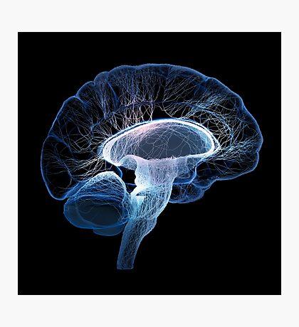 Human brain complexity - Conceptual Photographic Print