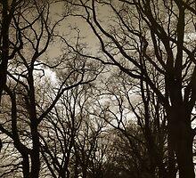 Oak Road by Danuta Antas