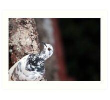 A curious Pigeon Art Print