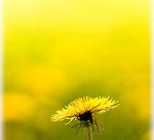 Good Day Sunshine by geoff curtis