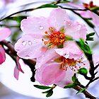 Almond dew  by kindangel